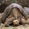 lonesomegeorge_byputneymark