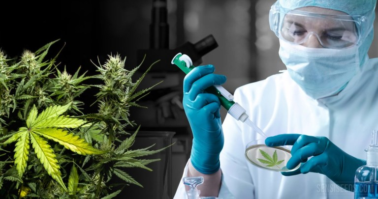 700 Medical Cannabis Studies by Disease